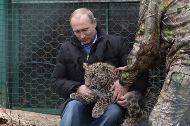 Putin's Leopard and Danish Giraffes!