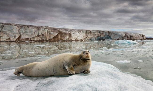 fur in the news, seal hunt, fur, wild fur