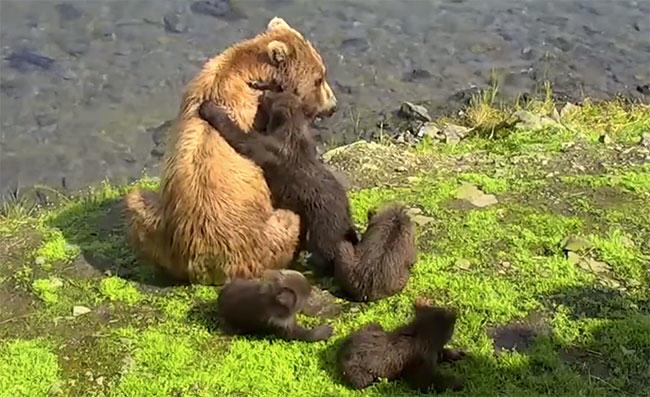 fur, media, fashion, fur in the news, fur industry, fur trade, bearcam