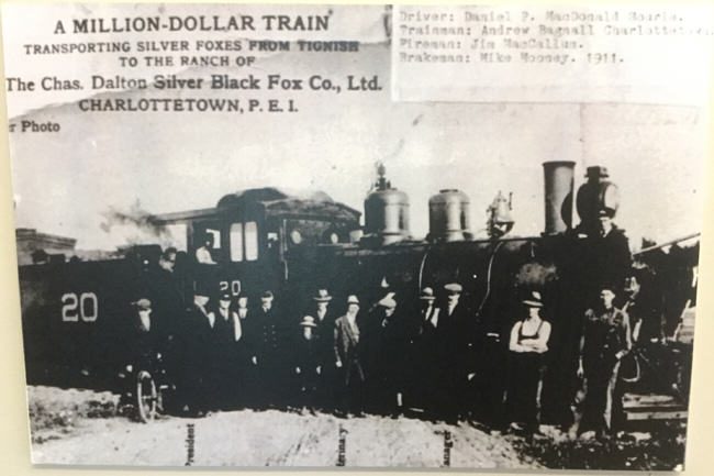 Million Dollar Train, fox farming, Charles Dalton, prince edward island