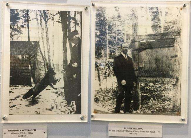 fox farming, Robert Oulton, prince edward island