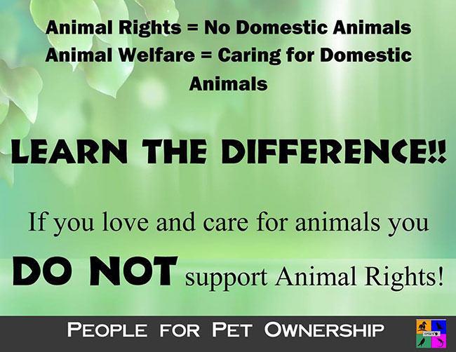 fur in the news, animal welfare, animal rights