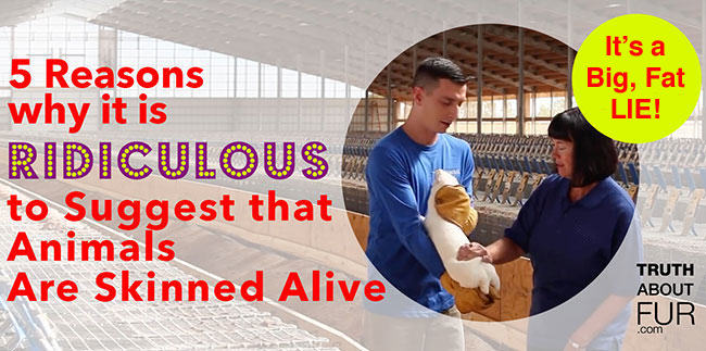 5 Reasons Why It's Ridiculous to Claim Animals are Skinned Alive