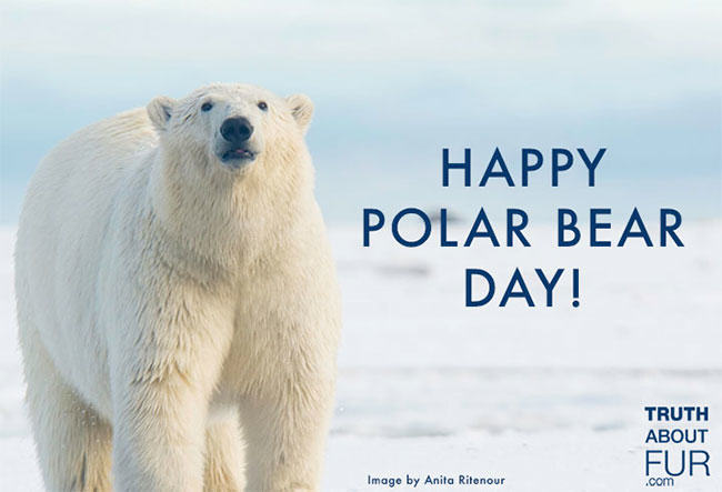 polar bear day, wildlife, fur, fur in the news