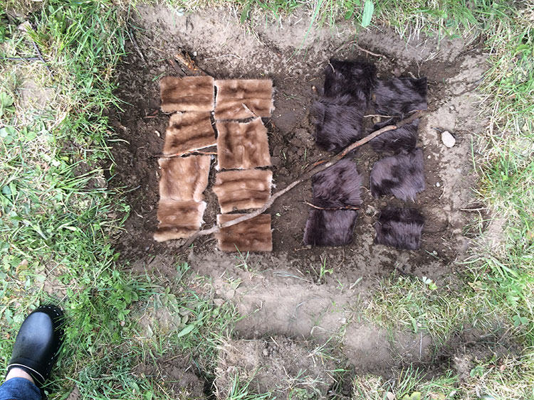 The Great Fur Burial, Part 2: After Three Months