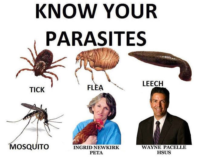 May Fur News: Parasite Guide and Vegan Death Threats