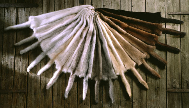 mink colours, mink fur, mink pelts
