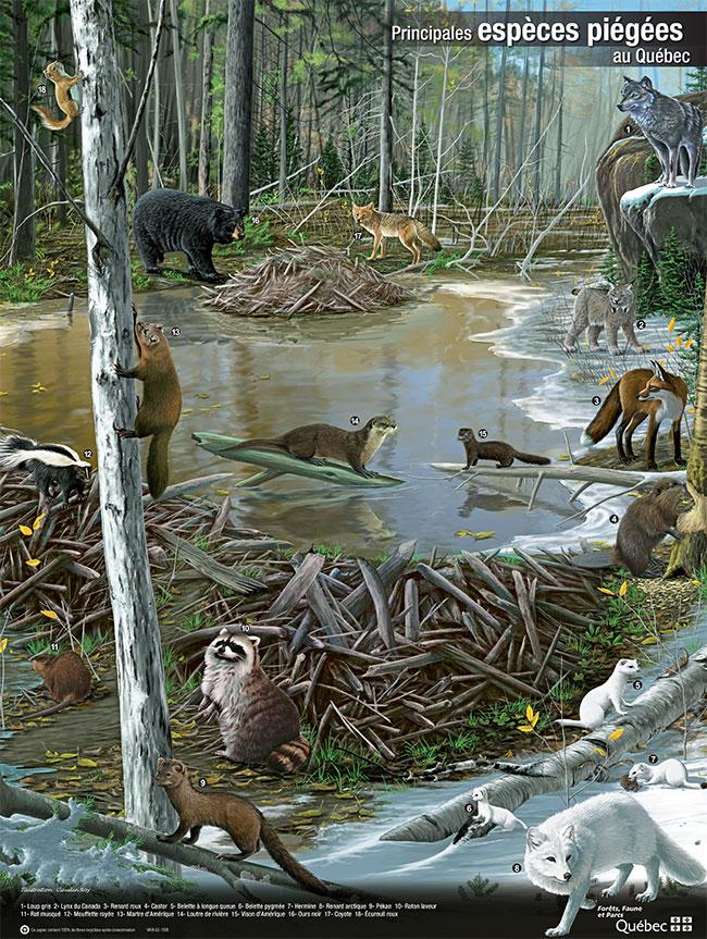 trapping, quebec, wildlife, wildlife management