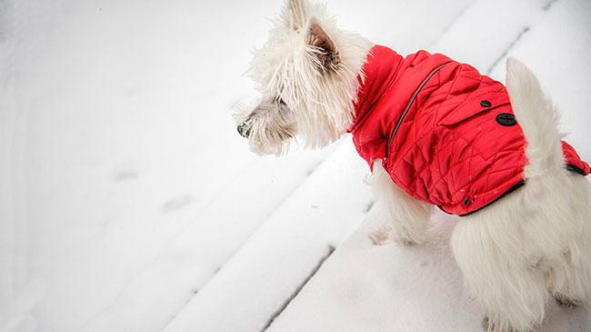 fur in the news, fur farm vandals, chili vest, Finland, wolves, pet dogs