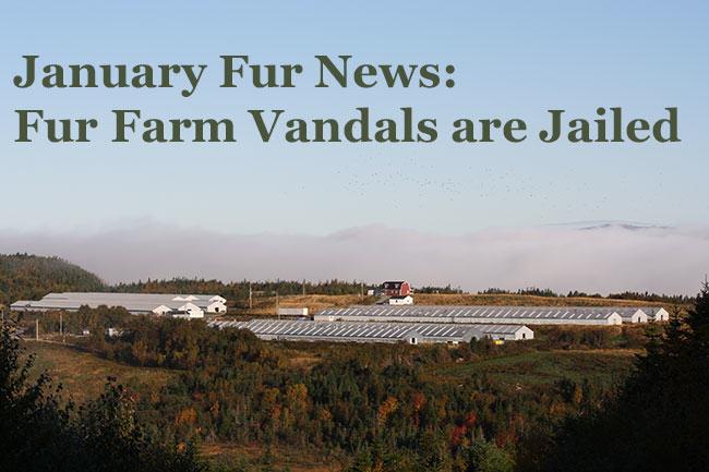 January Fur News: Fur Farm Vandals Are Jailed