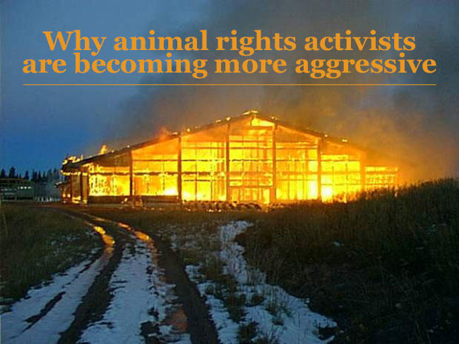 Why Animal Rights Activists Are Becoming More Aggressive