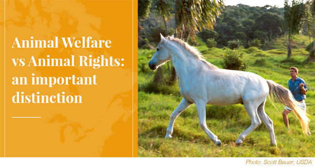 Animal Welfare vs Animal Rights: An Important Distinction