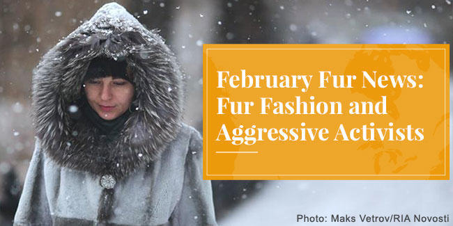 February Fur News: Fur Fashion and Aggressive Activists