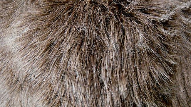 vegan fashion, fake fur, fur retail