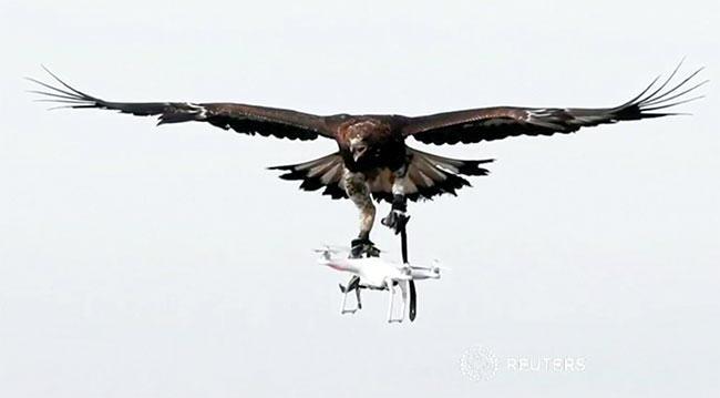 eagles, drones