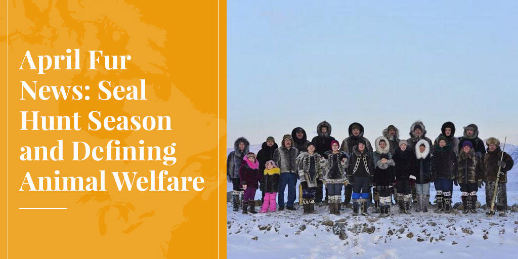 April Fur News: Seal Hunt Season and Defining Animal Welfare