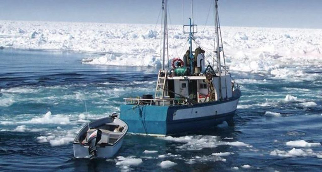support for sealing, seal hunt, Newfoundland, Canada