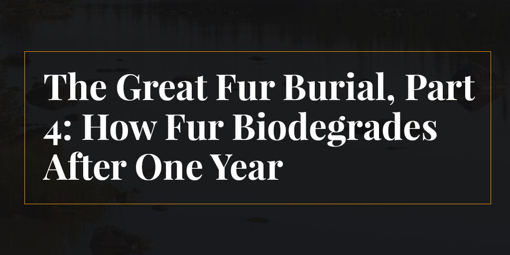 The Great Fur Burial, Part 4: How Fur Biodegrades After One Year