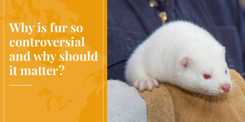 why is fur controversial