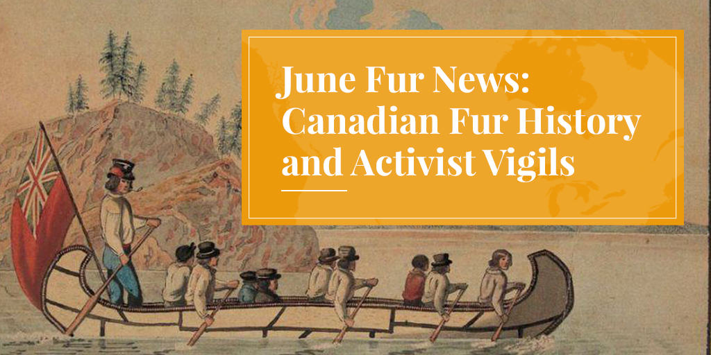June Fur News: Canadian Fur History and Activist Vigils