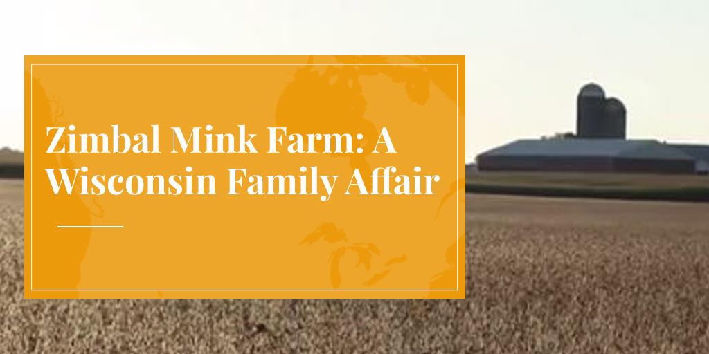 Zimbal Mink Farm: A Wisconsin Family Affair