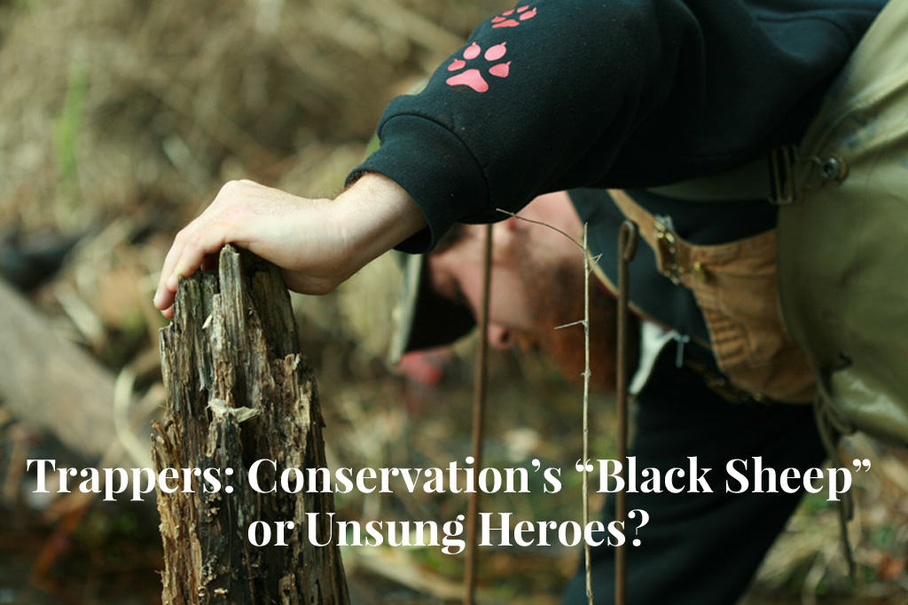 "Trappers: Conservation's ""Black Sheep"" or Unsung Heroes?"