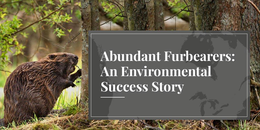 fur trade uses only abundant furbearers