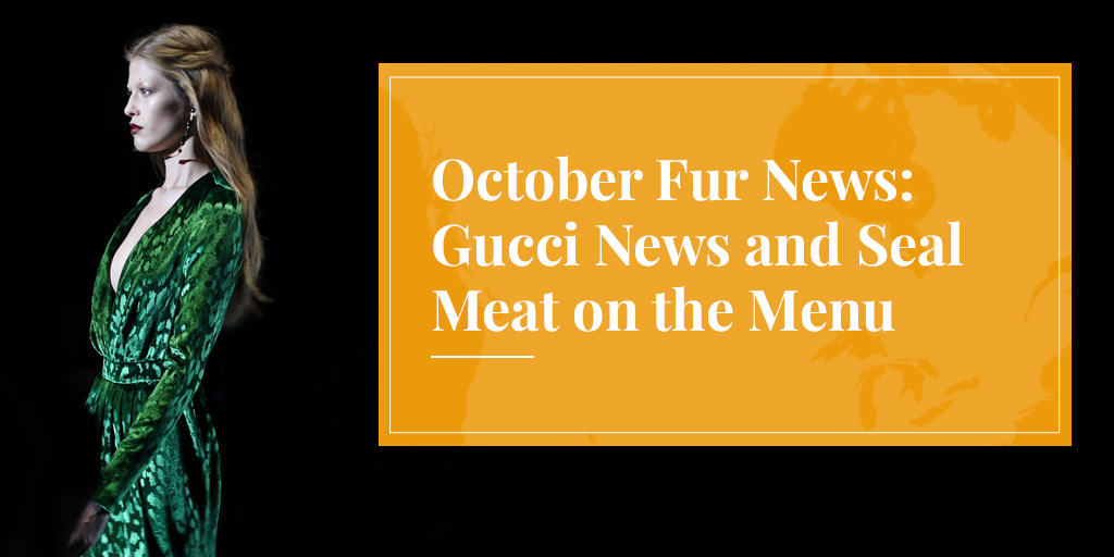 October Fur News: Gucci News and Seal Meat on the Menu