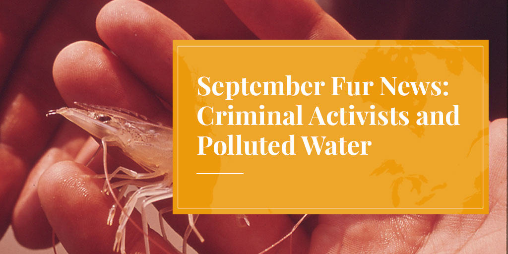 September Fur News: Criminal Activists and Polluted Water