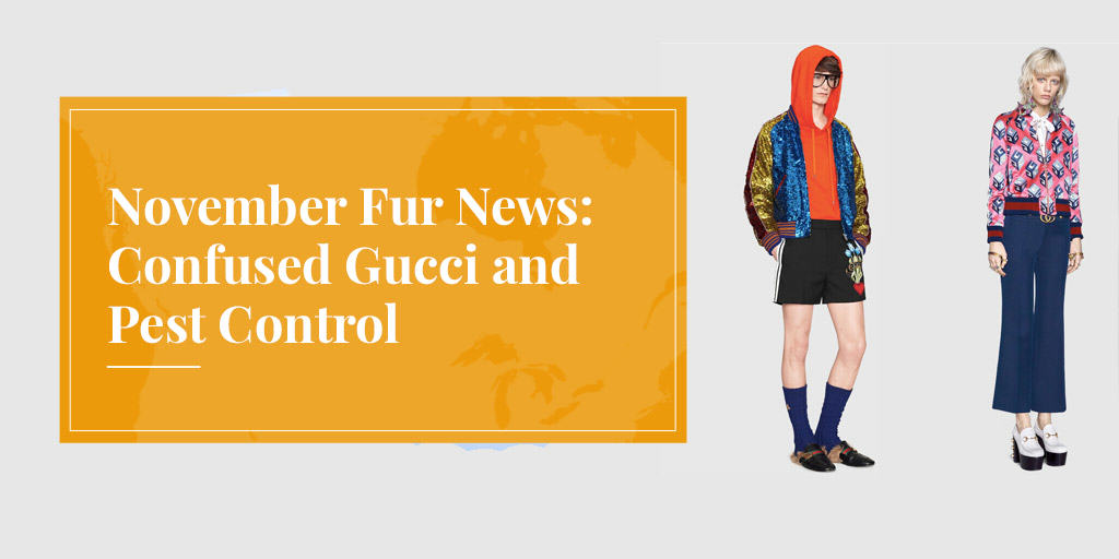 November Fur News: Confused Gucci and Pest Control