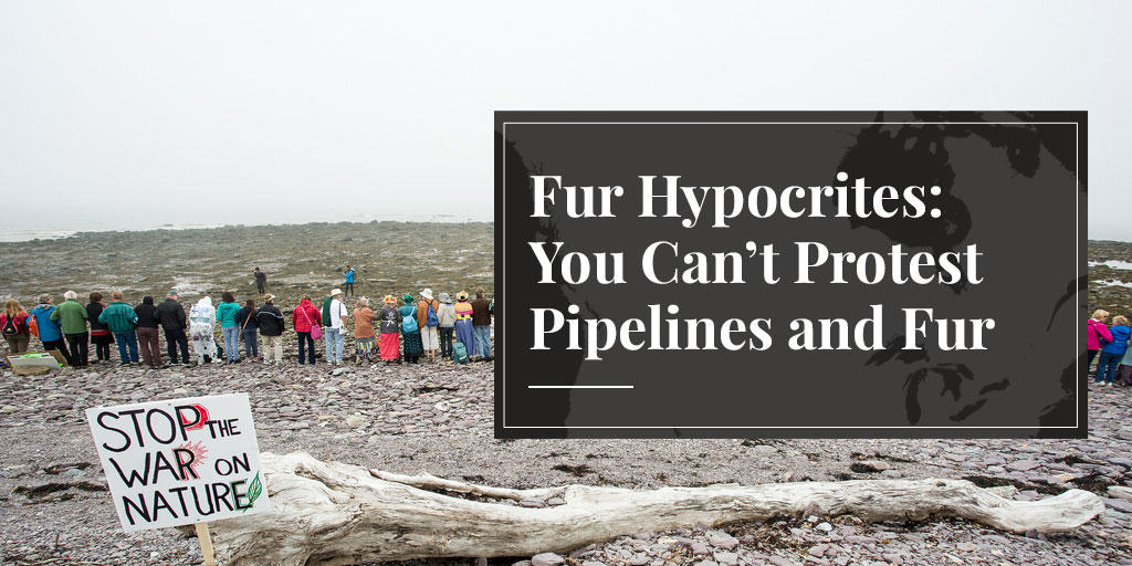 Fur Hypocrites: You Can't Protest Pipelines and Fur