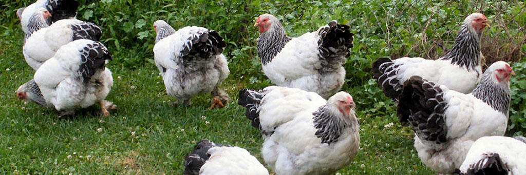 morality of farming animals