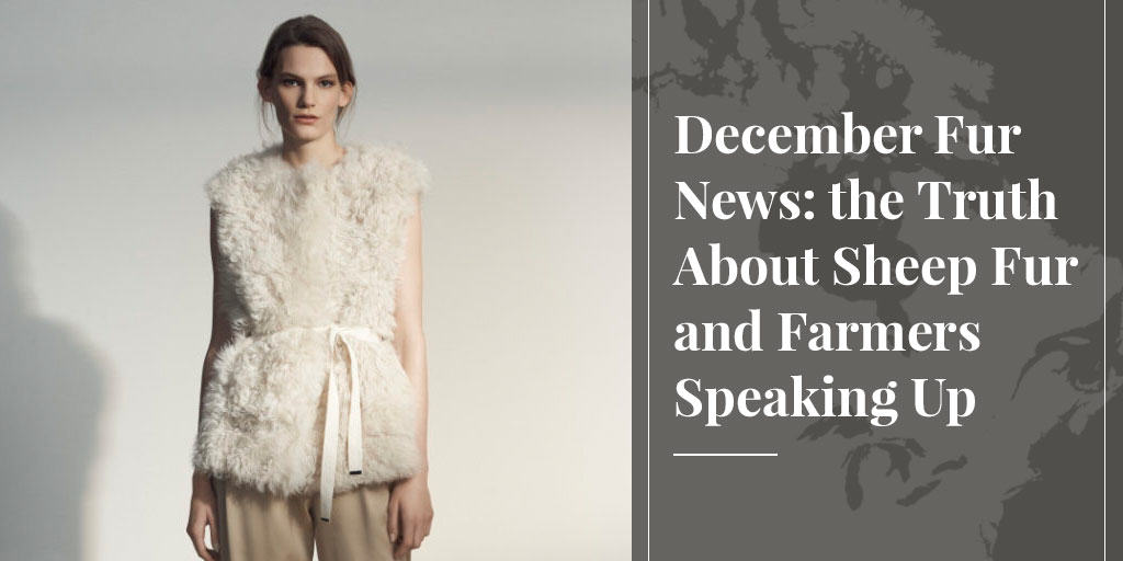 December Fur News: the Truth About Sheep Fur and Farmers Speaking Up