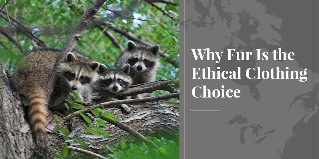 Why Fur Is the Ethical Clothing Choice