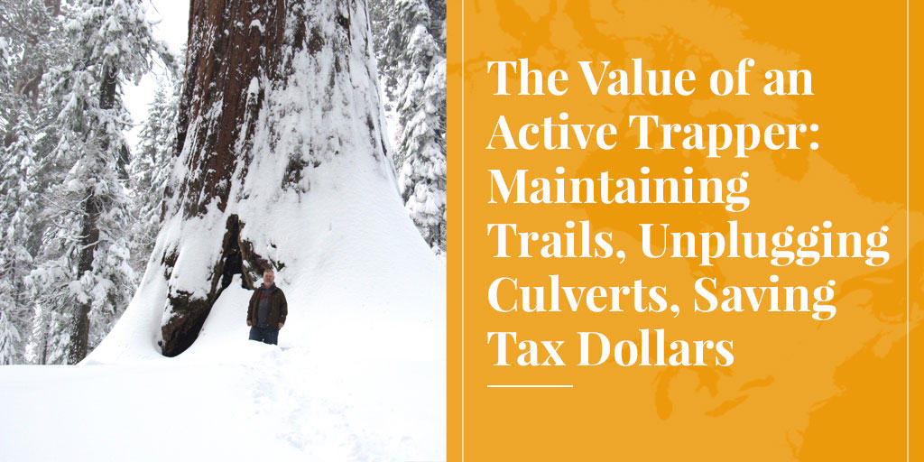 The Value of an Active Trapper: Maintaining Trails, Unplugging Culverts, Saving Tax Dollars