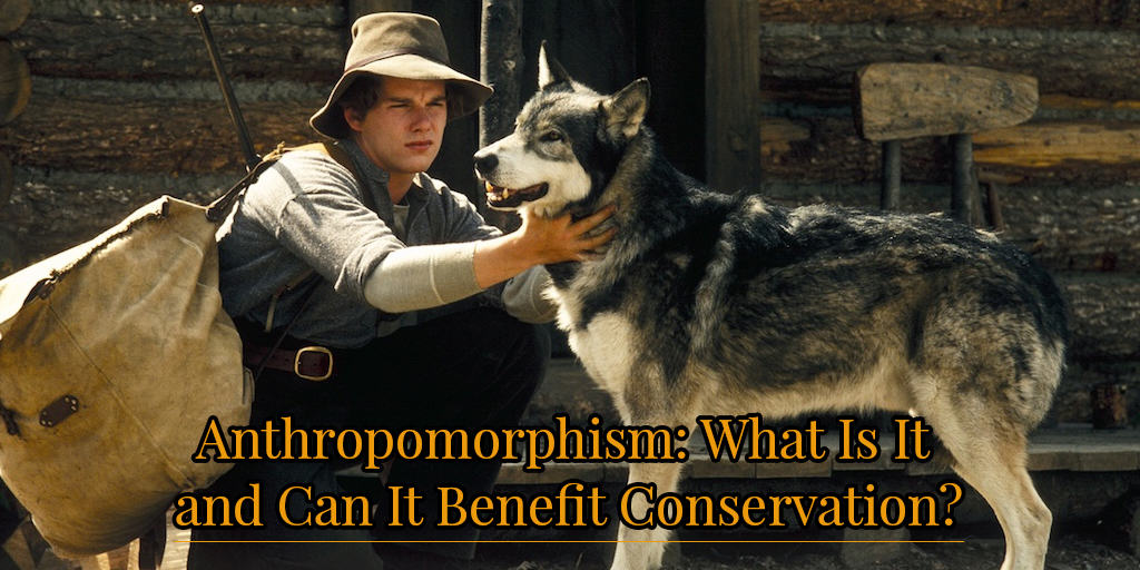 anthropomorphism in White Fang