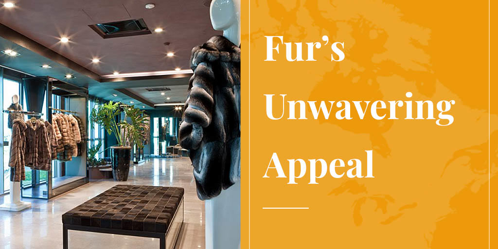 Fur's Unwavering Appeal