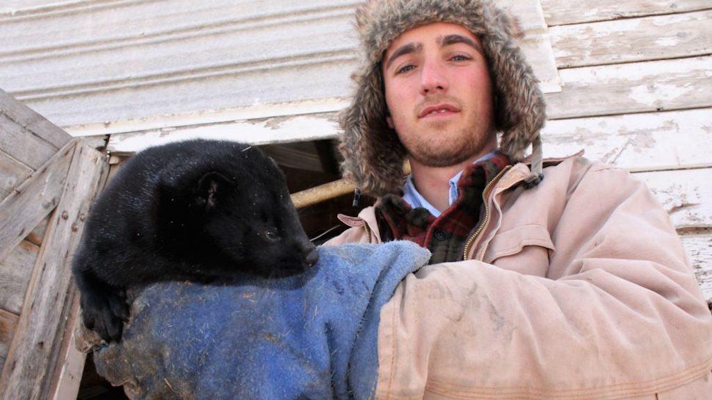 Jackson Hobbs mink farmer