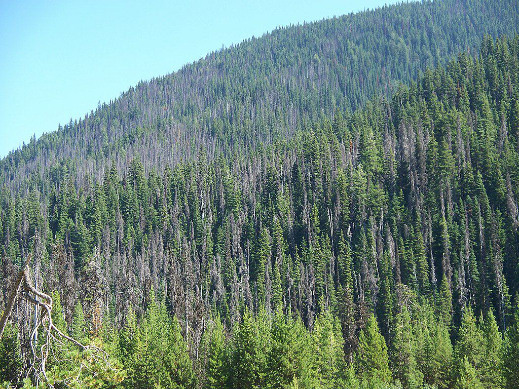 British Columbia furbearers falling