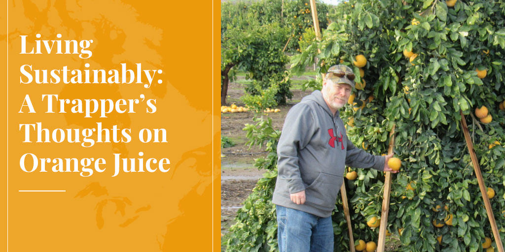 Living Sustainably: A Trapper's Thoughts on Orange Juice