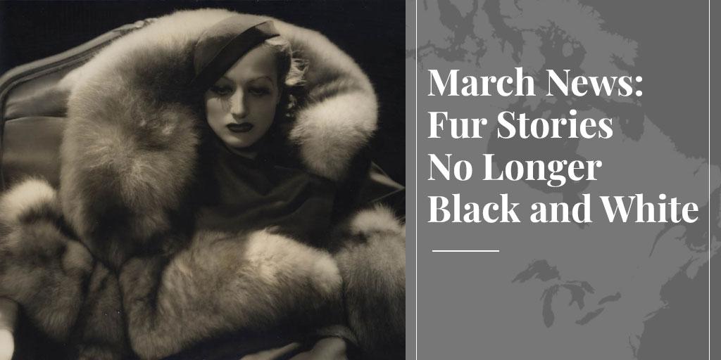 March News: Fur Stories No Longer Black and White