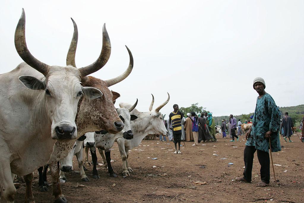 cattle market in Mali