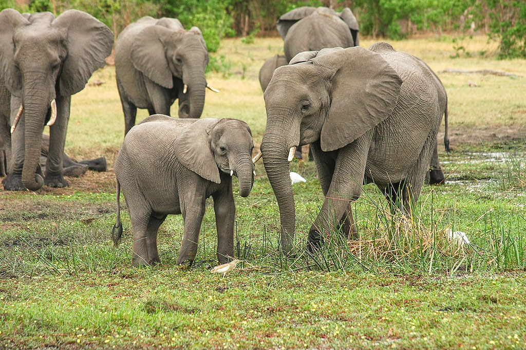 wildlife management for elephant populations