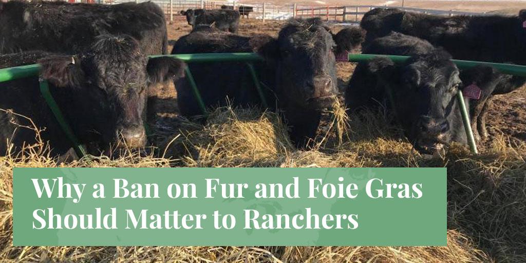 ranchers and bans on fur foie gras