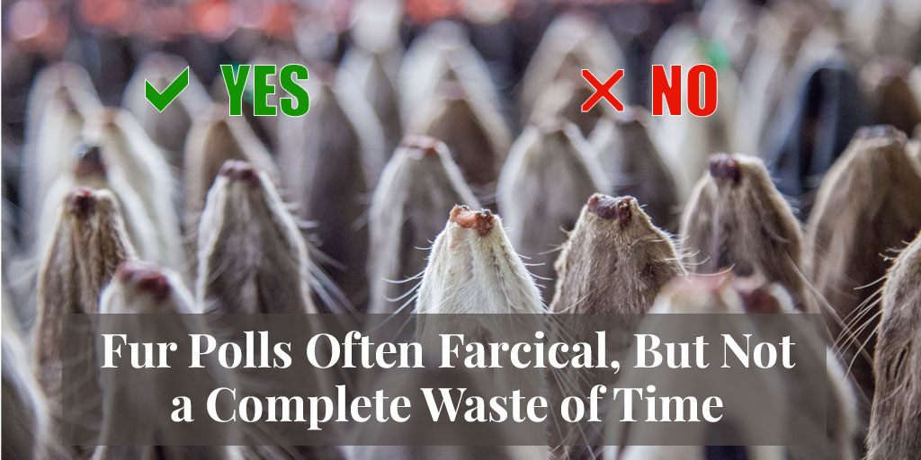 Fur Polls Often Farcical, But Not a Complete Waste of Time