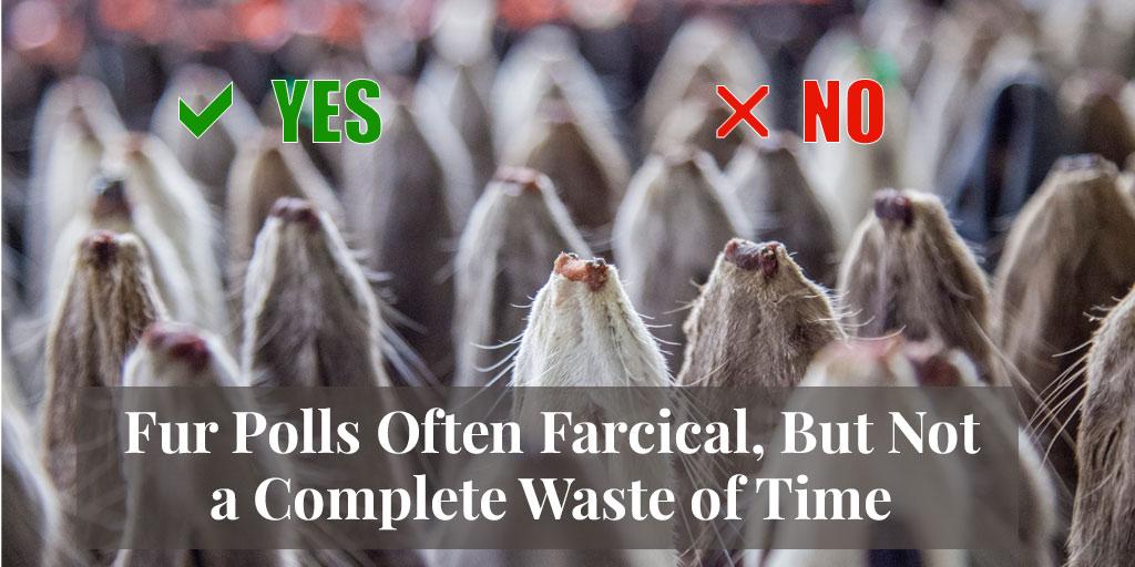 fur polls farcical