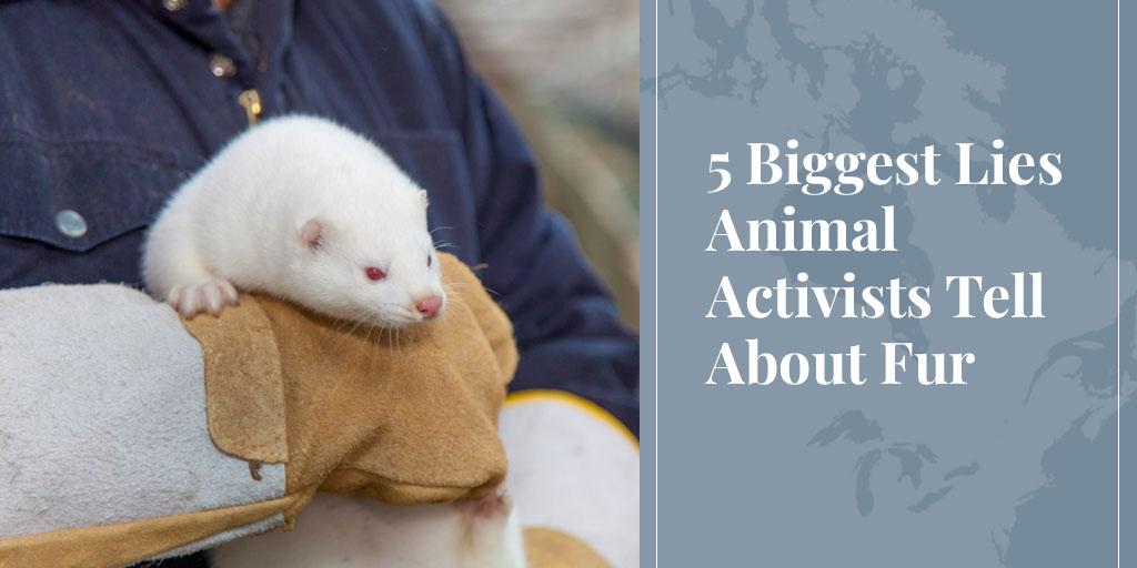 5 BiggestLies AnimalActivists Tell About Fur