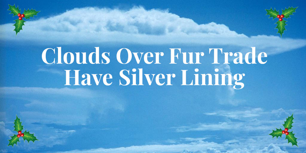 Clouds Over Fur Trade Have Silver Lining