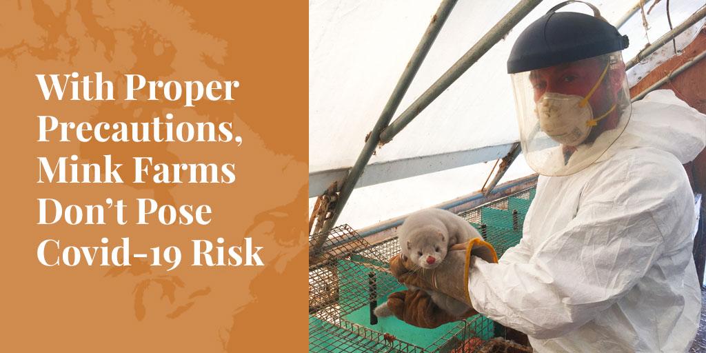 With Proper Precautions, Mink Farms Don't Pose Covid-19 Risk