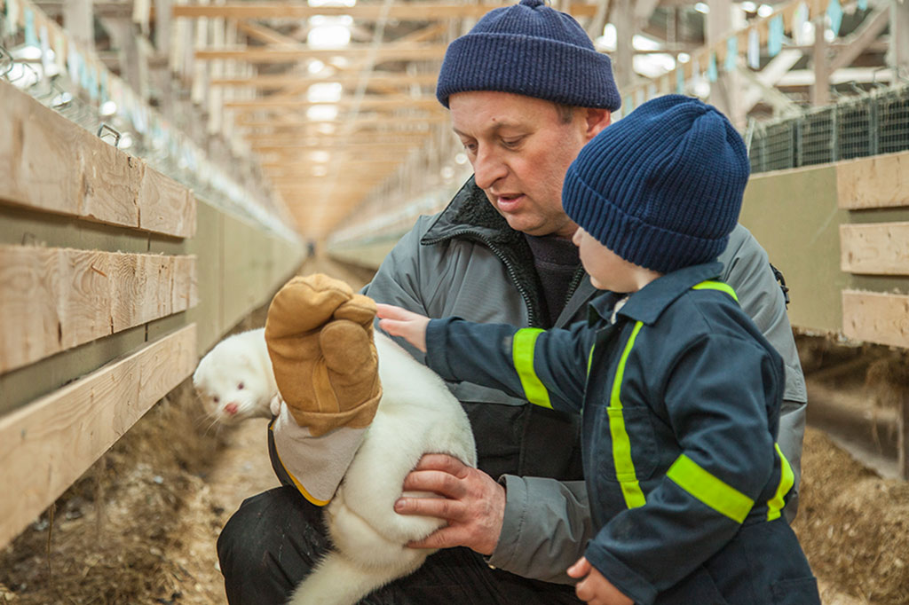 mink farms prioritise animal welfare